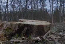 Активисты предлагают создать национальный парк чтобы спасти Чернечий лес. Видео