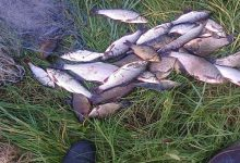 Браконьер наловил рыбы на сумму около 50 тыс. грн