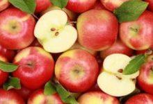 Эксперты ожидают, что в 2018 году увеличится объем урожая фруктов и ягод