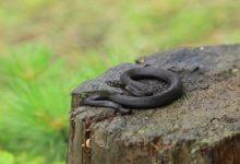 На Львівщині від укусів змій до лікарень потрапили двоє людей