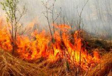 На Львовщине спасатели эвакуировали туристов с горы из-за возгорания травы