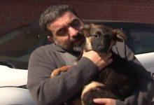 По Киеву ездят несколько автомобилей с маркировкой Бесплатная собачья помощь. Видео