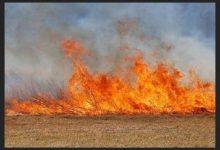 Спалювання минулорічної сухої трави призводить до торф'яних пожеж та руйнує екосистему