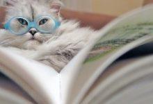 У Києві проводять благодійний книжковий аукціон на допомогу котикам