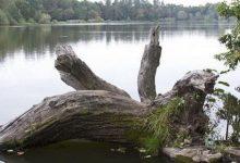 В Гидропарке из озера спасатели достали тело мужчины