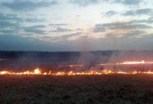 В Киевской области горит сухая трава