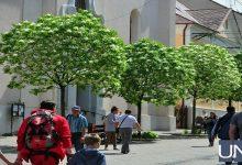 В Ужгороде расцвело самое быстрое дерево в мире. Фото