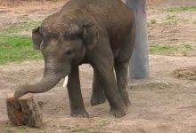 В столичном зоопарке животные увидели первый по-настоящему весенний дождь. Видео