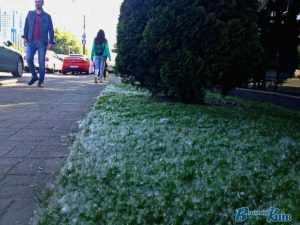 Мешканці Києва почали потерпати алергії