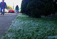 Мешканці Києва почали потерпати від алергії