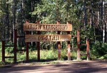 Местные жители жалуются на вырубку деревьев в парке Совки
