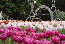 На Співочому полі достроково закрили виставку тюльпанів