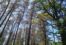 Пропадає велика ділянка лісу біля Виноградаря. Фото