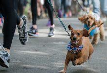 У Києві пройде Третій Благодійний Забіг із собаками