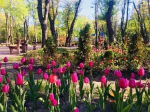 У Сирецькому парку скоро з'являться місця бігу, фітнесу, йоги та воркауту