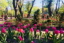 У Сирецькому парку скоро з'являться місця для бігу, фітнесу, йоги та воркауту
