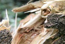 В Черкассах в результате падения дерева пострадало 4 ребенка