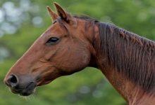 Во Львовской области умер мужчина вследствие ударов соседского коня