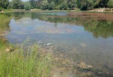 На Виноградарі озеро потерпає від сміття та водоростей
