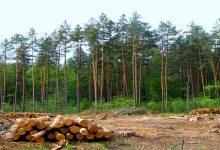 На Закарпатье скрывали масштабные незаконные вырубки леса