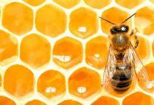 По Україні зафіксували масову загибель бджолиних родин
