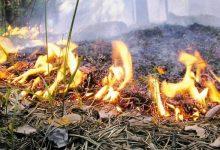 Сегодня в Киевской области сохраняется высокая пожарная опасность