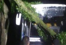 Сьогодні вночі київські рятувальники п'ять разів виїжджали прибирати поламані дерева