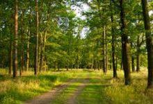 Суд вернул в государственную собственность 15 га земель лесного фонда