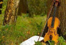 У парку ім. Тараса Шевченка проведуть безкоштовні концерти