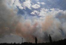 В Чернобыле снова горела трава
