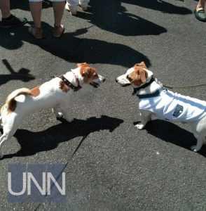 В Киеве на параде собак приняли участие около сотни домашних любимцев