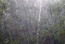 В Киеве во время ливня дерево убило женщину