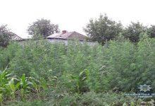 В Винницкой области полиция изъяла 10 кг наркотических средств и более тысячи кустов конопли