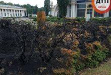 Вчора на території ВДНГ палали чагарники