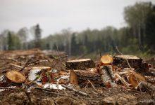 Жители Подольского района обеспокоены незаконной вырубкой деревьев