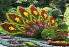 Завтра на Певческом поле состоится открытие летней выставки цветов
