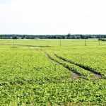 Хватай мішки – вокзал відходить, або чому Драбівська асоціація фермерів не підписала меморандум за скасування мораторію на продаж землі