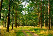 Прокуратура Киевской области обратилась в суд с требованием вернуть государству земли лесного фонда