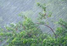 У Києві 2 липня очікуються посилення вітру