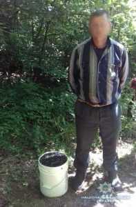 Житель Поліського району назбирав понад 12 кг чорнобильських ягід на продаж