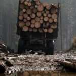 Ущерб от незаконных рубок за два с половиной года 736 663,4 тыс. гривен – Игорь Молоток